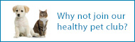 Join Gortland Vets Health Pet Club