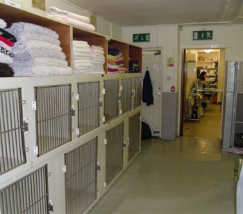 Gortland's Kennel Area